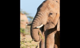 Wounded Elephant Finds Safe Haven