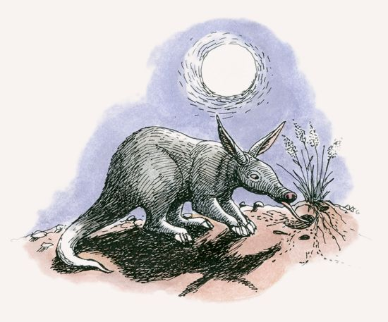 aardvark mpalalive!Aardvarks Diagram #8