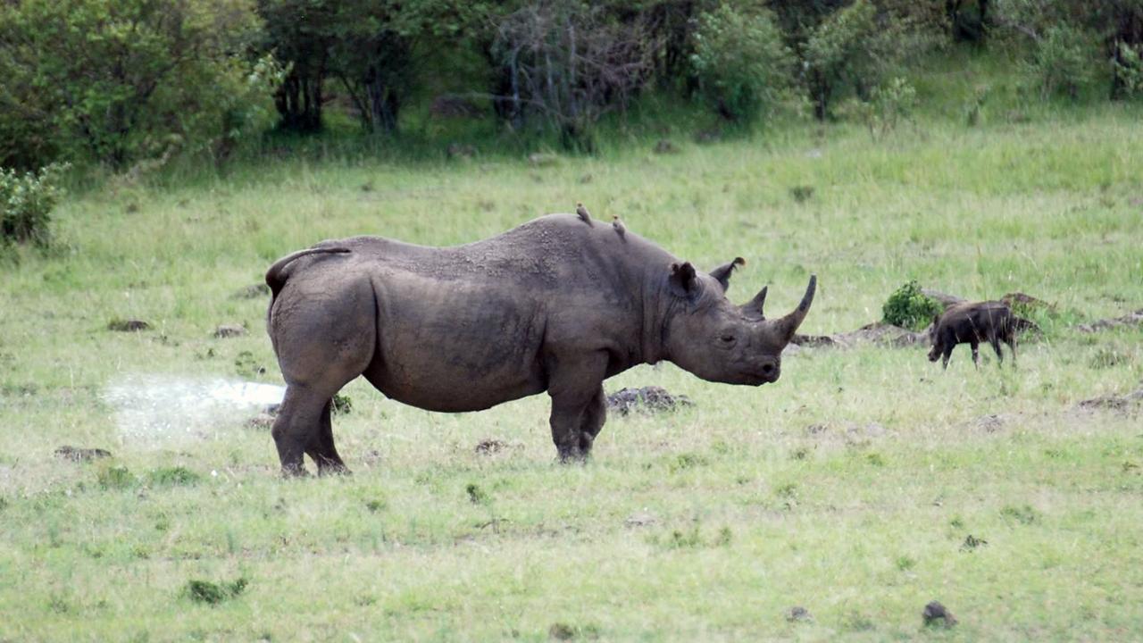 Black Rhinoceros Habitat