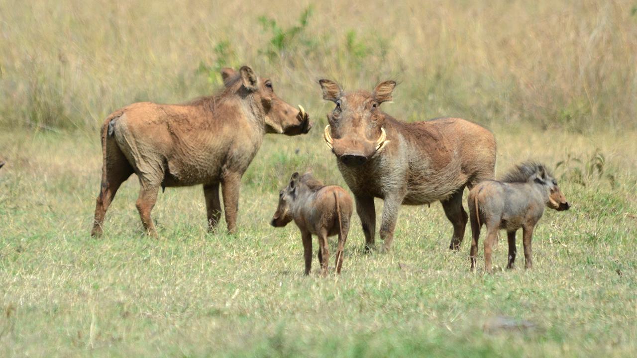 warthog mpalalive