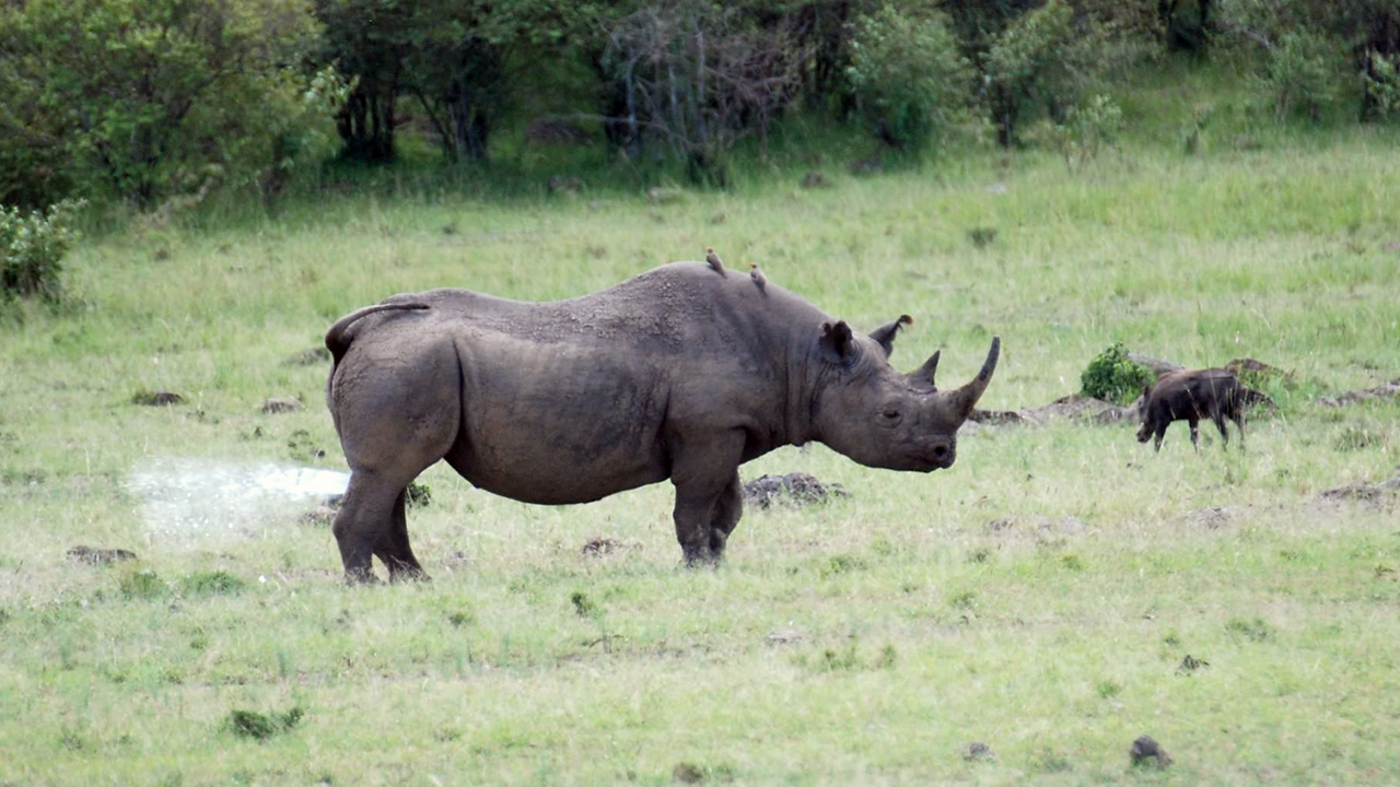 Black Rhinoceros Habitat